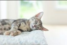Sleep / Products to help aid you a good night's sleep... / by Bath & Unwind