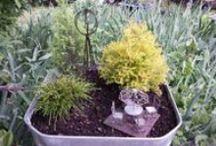 Our Fairy Gardens