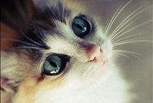My therapeutic cat collection / Cute cuddly kitties / by Carole Hsin Yi Chen