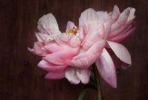 FlowersILove