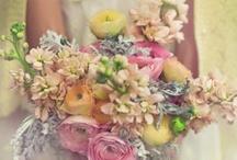 Fleurs Et Coleurs