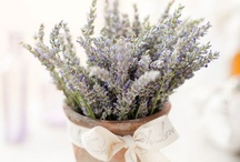 Lavender! Yes, please