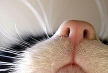 You've Gotta Be Kitten Me / by Sarah Meyer