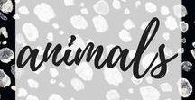 animals / • animal ideas • diy animal treats and more •