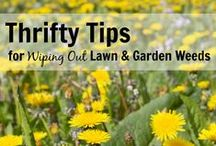 Gardening and Outside Projects / Gardening and outdoor project ideas, tips and tricks.