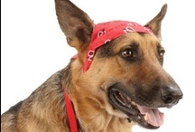 Bret Michaels Pets Rock / Bret Michaels Pets Rock™ collection is now available exclusively at PetSmart. Bring out your pet's inner rock star! / by PetSmart