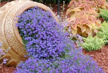 Garden/ Planting / by Clarisa Elmore