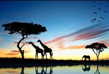 Travel Me South Africa / by Leanne Lintula