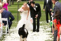 Pet Weddings / Everything your pet needs for that special day!
