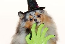 #MonsterCute Halloween / Spooky fun awaits those who visit PetSmart this Halloween. Hundreds of pet costumes, accessories, toys and treats will give every pet a special night out. http://petsmartsocial.com/halloween2 / by PetSmart