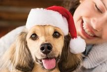 Celebrating the Pawlidays / It's the most wonderful time of the year to show your pet some love and cheer!