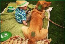 St. Patrick's Day Pinspiration / Everything you need to celebrate St. Patty's Day with your pet!