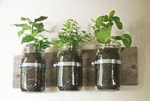 Tuinieren in huis