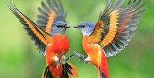 •Birds•