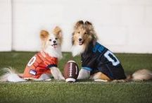 Get in the Game / Show your team spirit! Shop our sports gear for dogs, and team logo Pet Expressions.