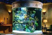 Fish Tanks / by Dwayne Hays
