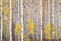 Art to Hang-Trees / by Andrea Albersheim