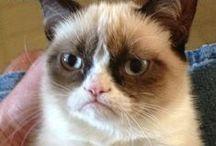 Grumpy Greats! / Grumpy Cat Memes & Other Similar Grumpy Greats / by Dwayne Hays