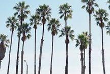 .: Cali Dreaming :.