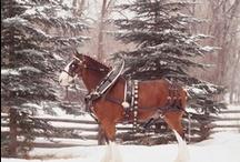 Horses / by Todd Harding