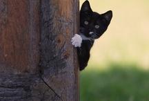 Beautiful Kittens / by Barbara Siglin