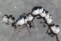 Birds...adorable Birds... / by Barbara Siglin