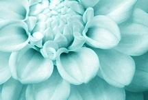 Tiffany Blue / by Allison Wofford