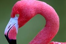 PINK FLAMINGOS / by Allison Wofford
