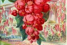 vintage seed catalog / by Pamela C