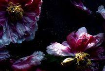 Flowers / by Holli Schaub