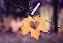 Herbstdeko / Fall Decoration
