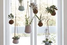 Container Gardening / Container gardening pins for healthy container gardens. New uses for old containers, tips for healthy container veggies, and tricks for the most beautiful floral container arrangements :)
