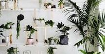 Indoor House Plants and Living Art / Beautiful homegrown living decor to bring nature into your daily life