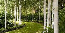 Garden Design / Outdoor architecture and garden form