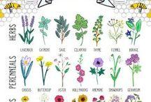 Garden Infographics / Educational infographics about organic gardening topics. Garden planning, tips on growing food, and gardening hacks!
