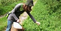 Foraging & Wildcrafting / Foraging for wild edible food and wildcrafted plants