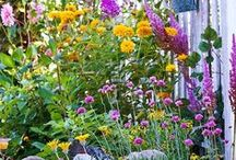 Organic Flower Gardening / The best ideas for growing organic flowers in your yard or landscape! You can grow beautiful organic flowers yourself in your own yard so you'll always have lovely blooms for around your home. Organic flower gardening is also an incredibly relaxing hobby :)