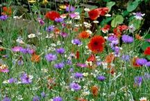 Perennial Flowers / The best ideas for incorporating and growing perennial flowers into your landscape! These beautiful blooms will brighten your yard year after year :)