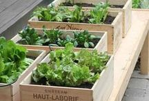 Small Space Gardening Ideas / Small space gardening ideas to help you make the most of your available space and create a thriving, productive organic garden!