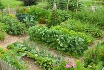 Potager Garden / Design a potager garden with these tips! Potager gardens are lovely ornamental vegetable gardens which will both enhance the beauty of your yard, while also providing delicious vegetables for your family. Try potager gardening with these pins!