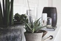 Natural Home Decor / Natural home decor ideas and inspiration. Bring nature into your house by adding thriving houseplants, touches of wood and stone, and fresh air.
