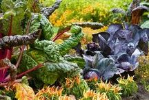 Edible Landscaping / Edible landscaping ideas to blend your ornamentals and edible plants into a beautiful productive landscape!