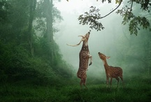 Nature  / by Rebecca Schweinberger