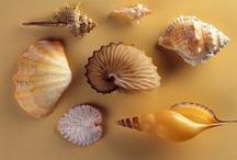 Sea Shells by the Sea Shore / by Dena Hazen