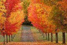 Fall / Winter / by Kirsten Harman