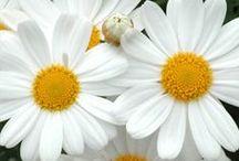 Flowers / by Jennifer Burke