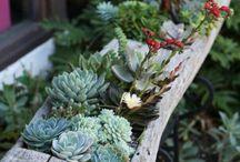 Garden e piante / by Ste Creazioni