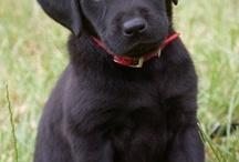 Buddy dog / by Emily McKinney