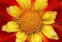 Flowers / by Jan Ruby