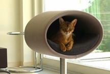 Pet Stuff / Ideas for furniture, etc for cats, dogs and rabbits / by Michele Carlson